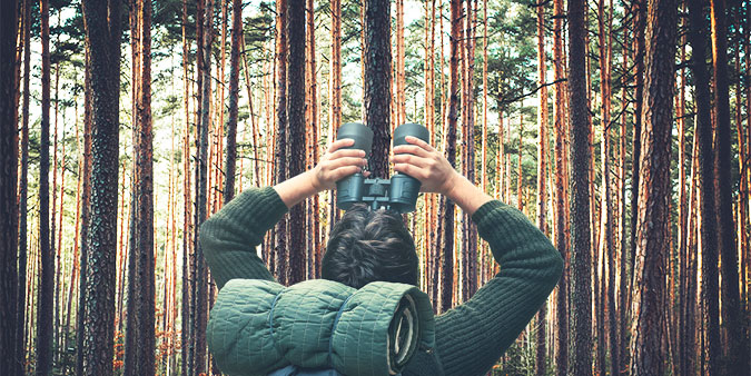 forest-hs.jpg